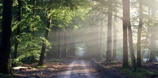 Δάσος της Ελπίδας