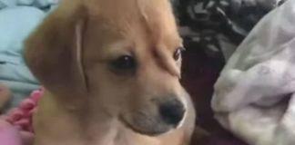 Σκυλί με ουρά στο κεφάλι