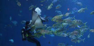Παγκόσμια Ημέρα Αλιείας