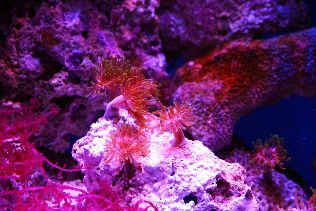 Κοράλι