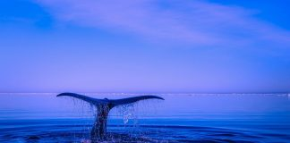 Φάλαινα Πειραιάς