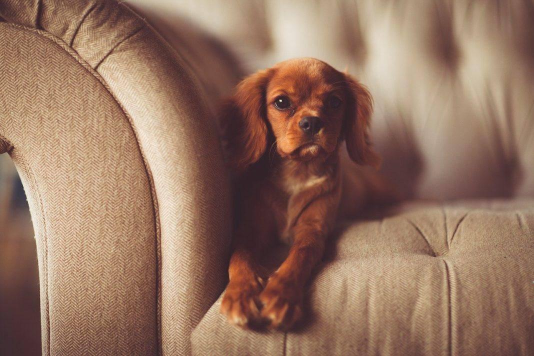 Σκύλος γλυκά