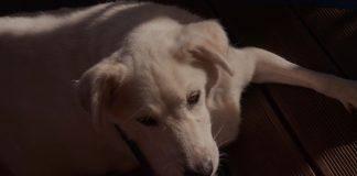Το Ημερολόγιο ενός σκύλου